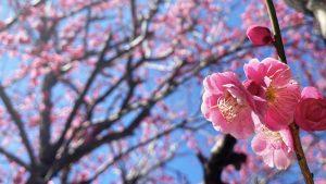 4/7・4/14・4/21・4/24・4/28 10:00〜 イコス上尾ヨガ